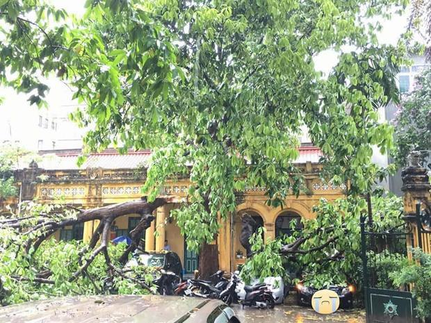 Một cây lớn bị gãy đổ trên ngõ Tây Sơn.
