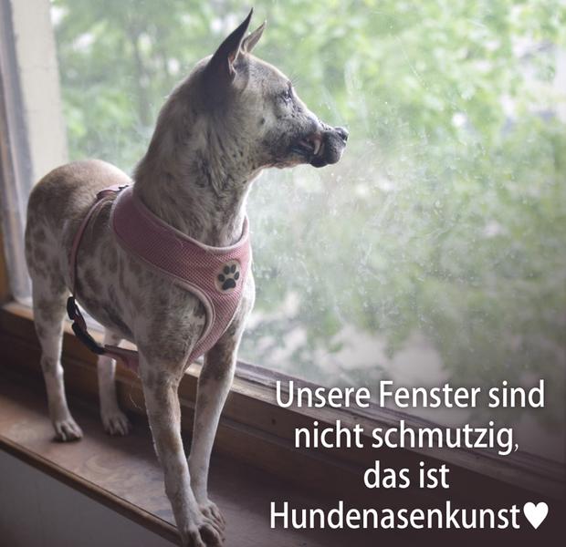 Chú chó đáng thương ngày nào hiện đang có một cuộc sống cực kì bình yên tại Đức. Ảnh: Fanpage RespekTIERE Leben