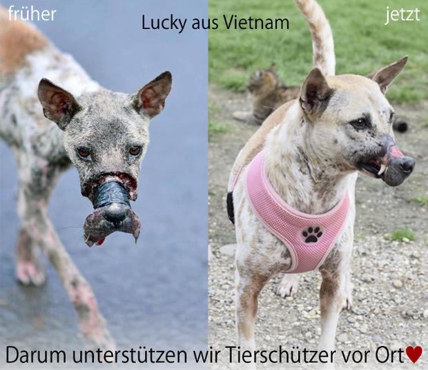Hình ảnh mới nhất của Lucky được chia sẻ hàng loạt trên mạng xã hội.