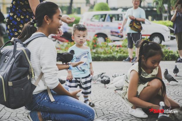 Bồ câu mang màu sắc kì lạ ở Nhà thờ Đức Bà: Trẻ em thích thú, người lớn nổi giận
