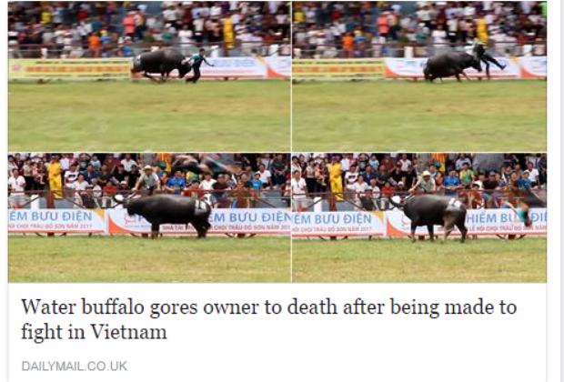 Tai nạn tại lễ hội chọi trâu ở nước tađã được một trang báo nổi tiếng ở Anh đăng tải.