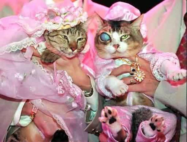 """Đôi """"vợ chồng mèo"""" củatriệu phú Ploy (Anh)."""