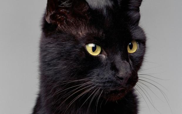 Chú mèo Blackieđược sách Kỷ lục Guiness ghi nhận là chú mèo giàu nhất thế giới.