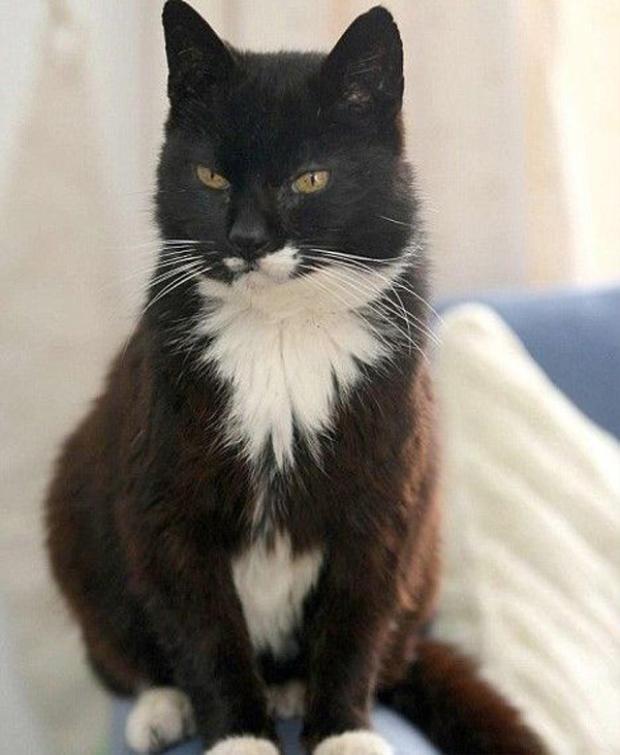 Cô mèo Creme Puff sống quãng đời kéo dài tới 38 năm 3 ngày.