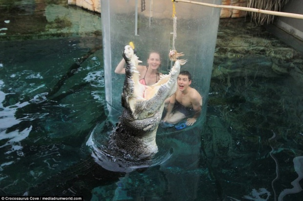 Khiếp đảm trò chơi mèo vờn chuột với cá sấu
