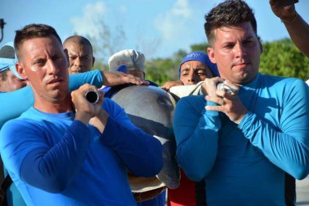 Cá heo được đưa bằng cán lêntrực thăng trước khi chuyển sang các bể bơi.