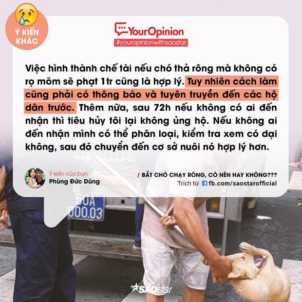 #YourOpinion: Bùng nổ tranh cãi về việc bắt chó thả rông và tiêu huỷ sau 72h chủ không đến nhận