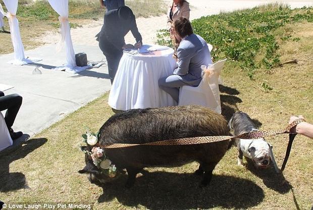 Đám cưới với phù dâu heo và phù rể chó