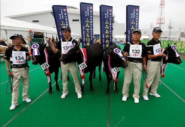 Những cô bò Bungo đến từ quân Oita, Fumiroman, Fumiteru, Fumigiky tham gia cuộc thi.