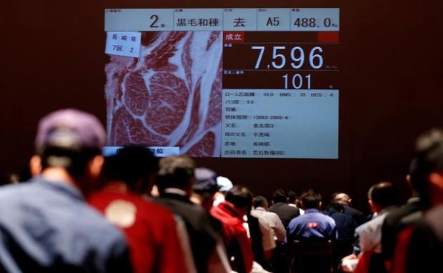 Những thương nhân đang nghiên cứu và đấu giá thịt bò tại cuộc thi.
