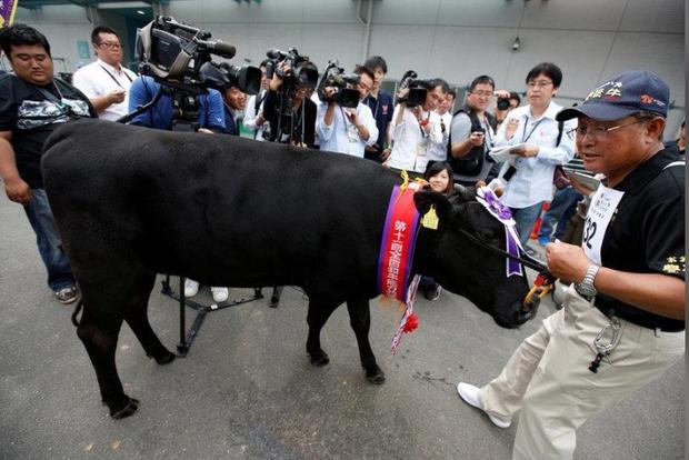 Cô bò giống Bungo tên Fumiayame từ quận Ota và ông chủ Tadanao Sato được các phóng viên vây quanh sau khi giành chiến thắng.