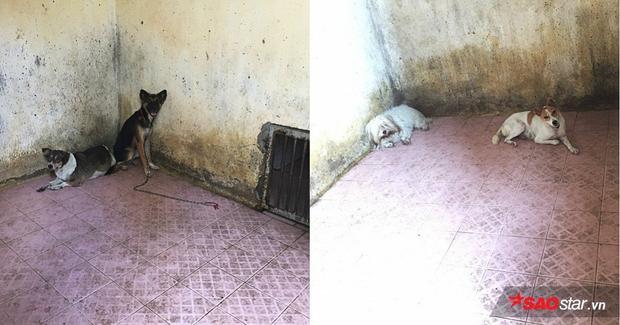 Chuồng nuôi nhốt chứa 4 con vào buổi sáng, giờ chỉ còn lại 2 con (con màu lông vàng trắng và vàng đen).