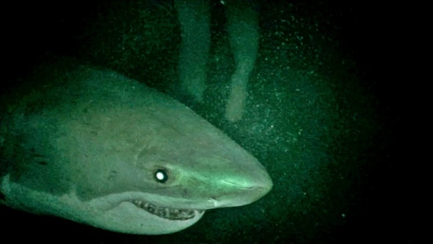 Nỗi sợ hãi tột đỉnh khi phải làm mồi cá mập trong Shark Terror