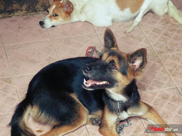 Chú chó hi vọng là chủ đến đón mỗi khi có ai đến gần chuồng.