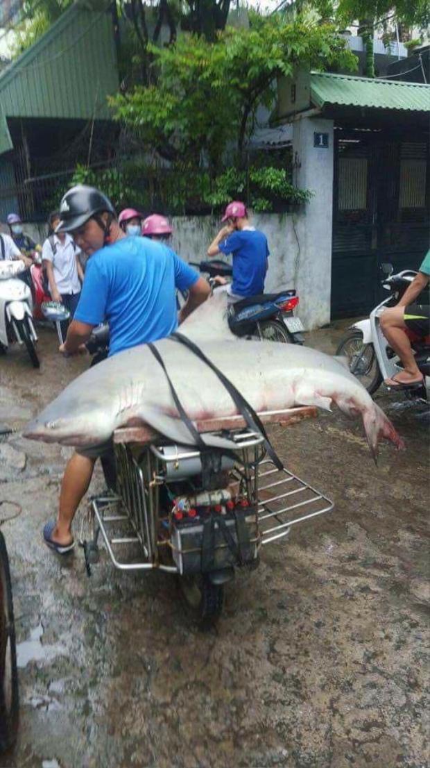 Con cá được một người dân địa phương chở về.
