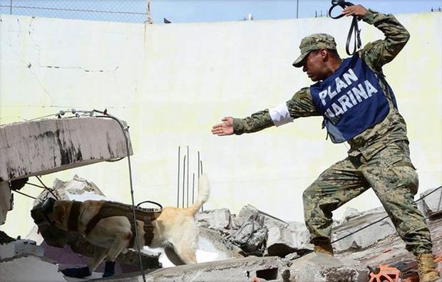 Chú chó nhỏ thuần thục việc tìm kiếm người trong đống đổ nát.