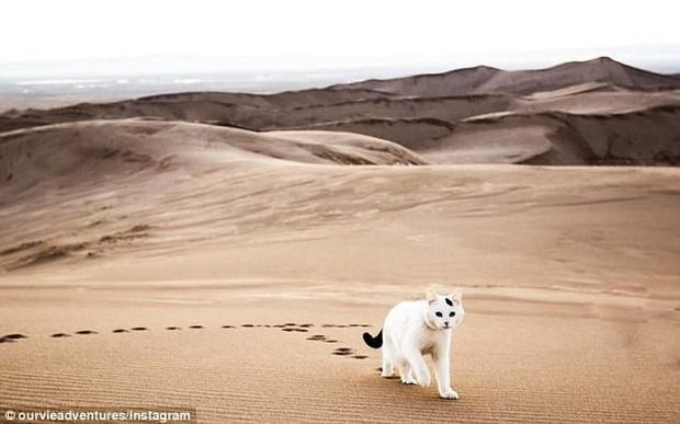 Chú mèo đang ở Vườn quốc gia the Great Sand Dunes tại Colorado.