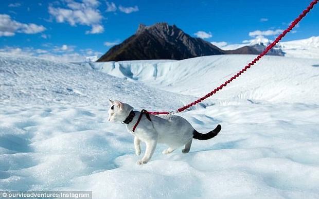 Vladimir đặt chân lên Alaska.