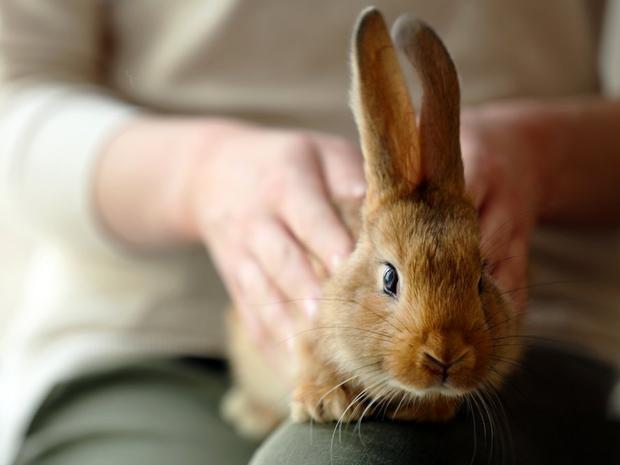 """Nhắc đến từ """"thỏ"""" vào ngày đầu tiên của tháng sẽ đem lại may mắn. Điều này đã thành truyền thống ở Anh hơn 2.000 năm. Nhiều truyền thuyết kể rằng nếu bắt đầu một tháng mới với từ """"rabbit rabbit"""", bạn sẽ gặp may mắn trong cả tháng. Nếu quên nói câu thần chú, bạn có thể nói """"tibbar tibbar"""" trước khi đi ngủ vào đêm hôm đó."""