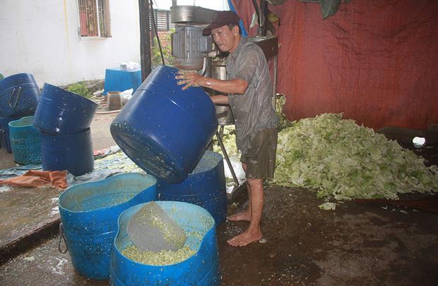 Nơi sản xuất và chế biến cải bắc thảo khiến nhiều người rùng mình vì quá bẩn.
