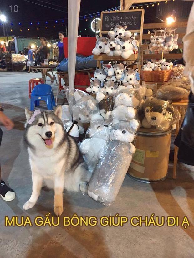 Nghề chính của chú cún là đi bán thú nhồi bông ở chợ đêm.