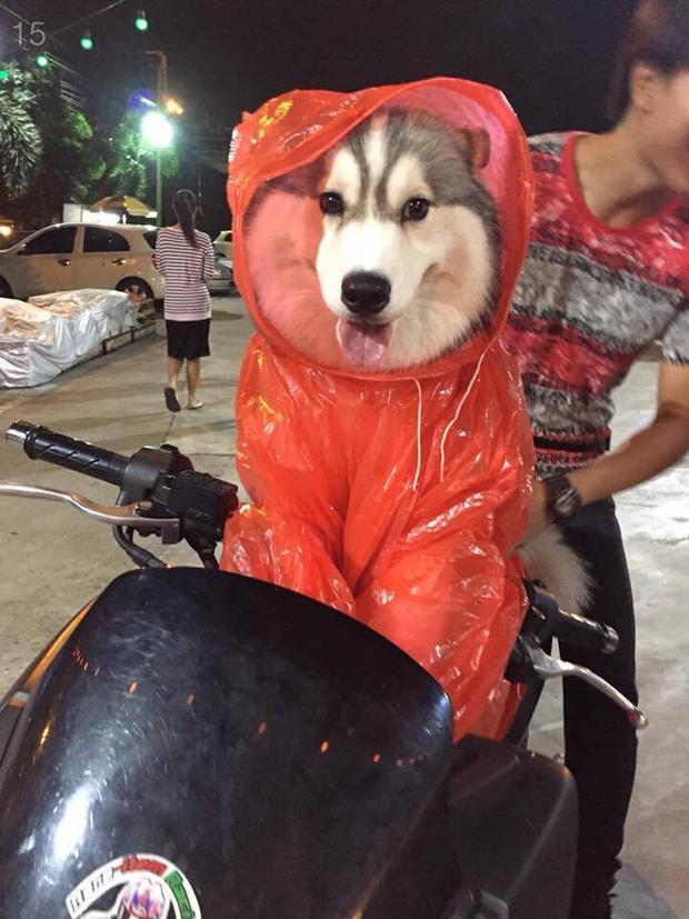Lộ diện chú cún có gương mặt đáng yêu gây sốt cộng đồng mạng