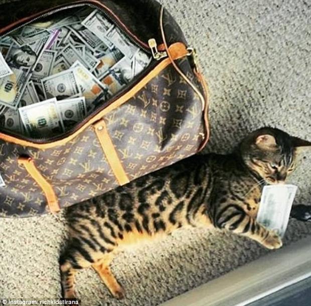 Hành lý đến Mỹ của một thanh niên đơn giản là chiếc túi hàng hiệu nhét đầy tiền và một con mèo nhỏ.
