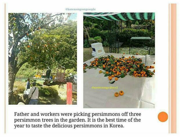 Bố chồng tiết lộ Song Hye Kyo thích ăn hồng chín trong ngôi nhà cũ.