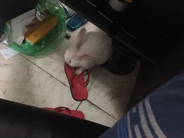 Con thỏ cầm tinh con chó gây sốt MXH khi quậy phá đến mức chủ phải rao bán
