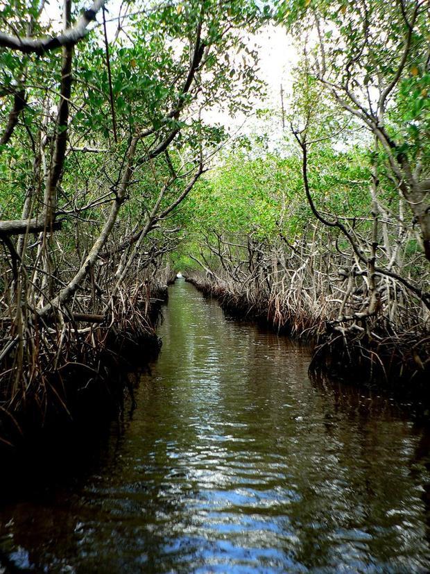Everglades, Florida: vùng đầm lầy được bảo tồn ở mũi phía nam Florida là nơi có nhiều loài động vật hoang dã khác nhau, từ lợn biển (manatee) đến cá sấu, thậm chí cả báo đen Florida.