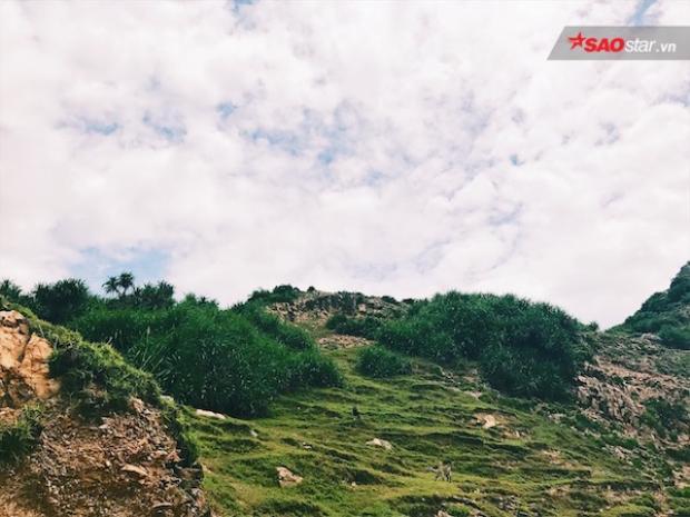 Hãy mau đến Eo Gió, Nhơn Lý để chiêm ngưỡng vẻ đẹp kì vĩ mà thiên nhiên đã ban tặng
