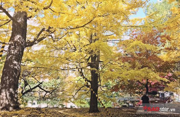 Những địa điểm ngắm lá đỏ đẹp nhất ở Hokkaido, Nhật Bản