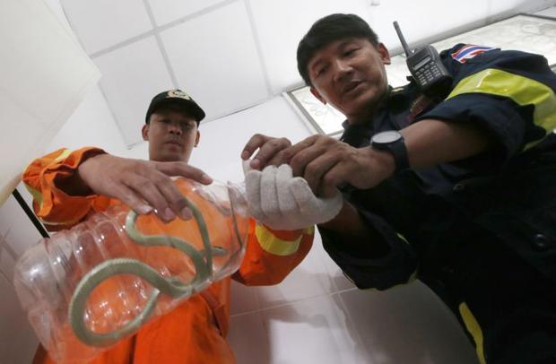 """Piya Saereerak, một bác sĩ thú y, cho biết cuộc """"xâm lược"""" của loài rắn ở Bangkok bùng nổ khi những đống rác thải tại thành phố ngày càng nhiều, làm gia tăng số lượng chuột - con mồi ưa thích của loài rắn."""