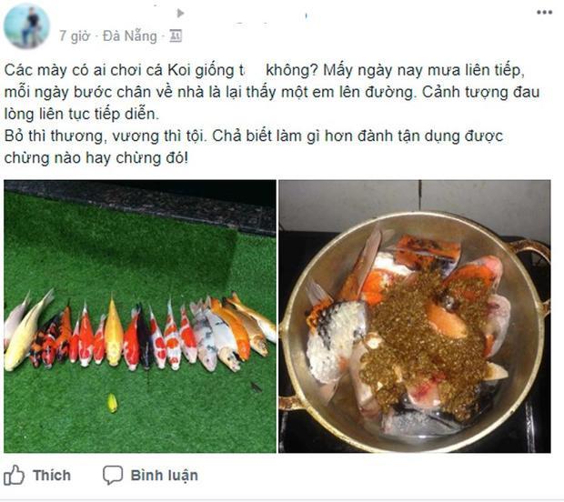 Câu chuyện buồn của anh Tiến về đàn cá Koi - (Ảnh chụp màn hình).
