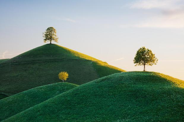 Khu vực có những cây 'đặc biệt' trên đỉnh đồi.