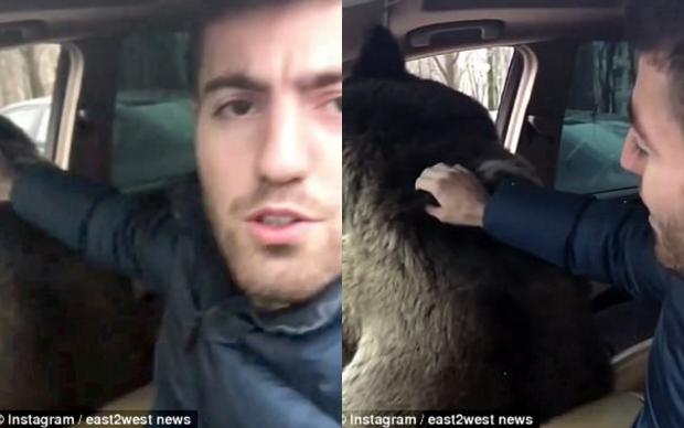 Anh chàng chở con gấu trên xe sang.