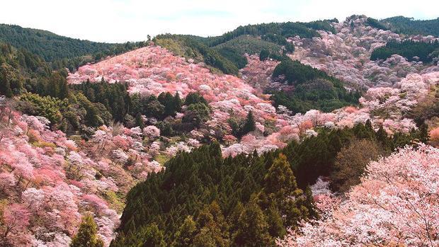 Cả một vùng núi được được trải thảm hoa, như kéo dài đến tận chân trời, nào kém gì mười dặm hoa đào của thượng thần Chiết Nhan.