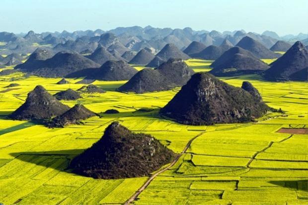 Hoặc cánh đồng hoa cải dầu đẹp như tranh vẽ ở Vân Nam (Trung Quốc) mà bạn đang nhìn thấy chính là sự kết hợp hài hòa giữa thiên nhiên và con người.