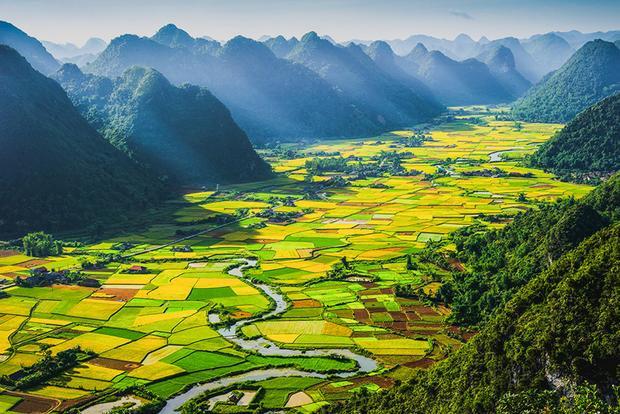 Vào mùa gặt, mảnh đất xanh như được phết một lớp màu vàng tươi mát, thơm mùi lúa mới.