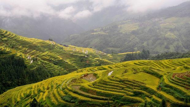 Tòng Giang, Trung Quốc: Màu sắc của các khu ruộng bậc thang của Tòng Giang, thuộc tỉnh Quý Châu của Tây Nam Trung Quốc, đẹp nhất vào mùa thu.