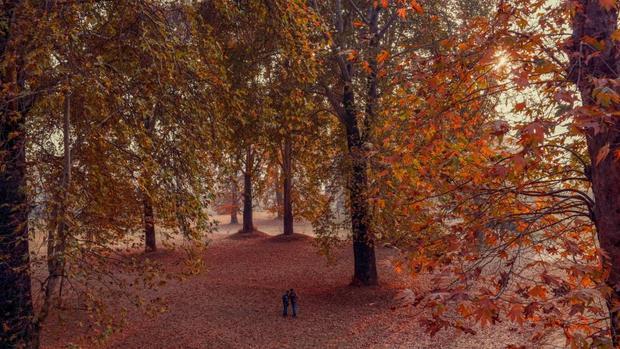Thung lũng Kashmir: tháng 11 đầy sắc màu trong vườn Nishat Bagh Mughal ở Srinagar.