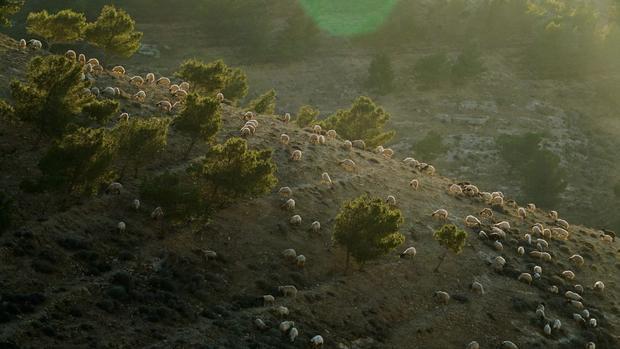 Hoàng hôn trên sườn đồi ở Madaba Governorate, Jordan.