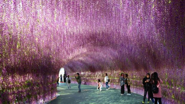 """Thẩm Dương, Trung Quốc: Một """"lâu đài hoa oải hương"""" dài 200 mét là một trong những điểm đến phổ biến nhất ở Liêu Ninh."""