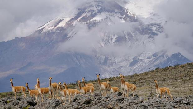 Núi Chimborazo, Ecuador là điểm cao nhất trên trái đất.