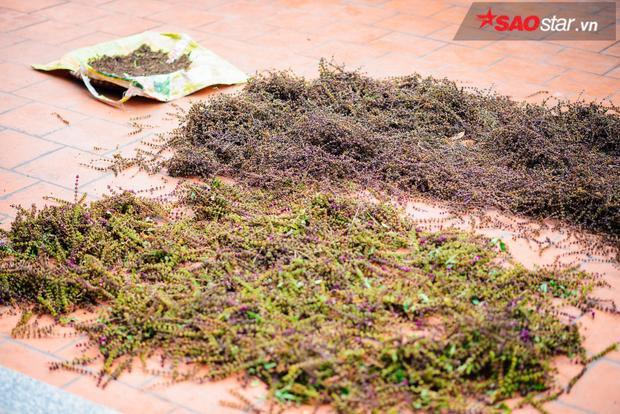 Giá của hạt húng khô dao động từ 1 đến 1,5 triệu đồng/kg.