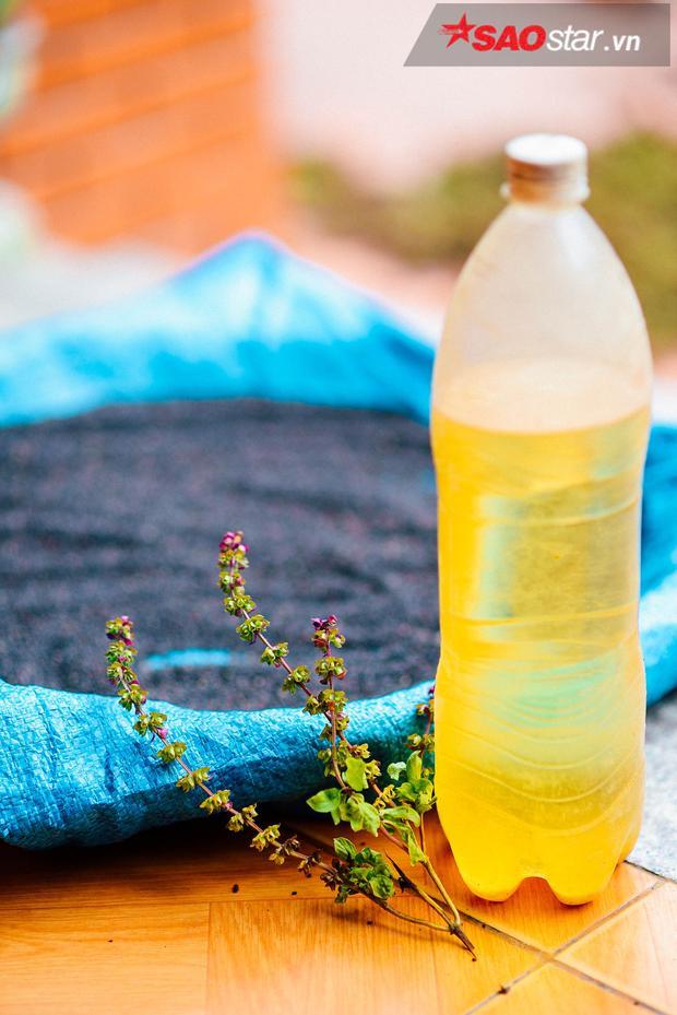 Chai tinh dầu húng nguyên chất.