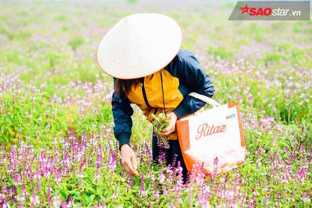 Chị Hạnh đi hái hoa để trẩy hạt.