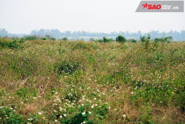 Bãi chính rộng hàng chục ha biến thành đồng cỏ hoang dại.