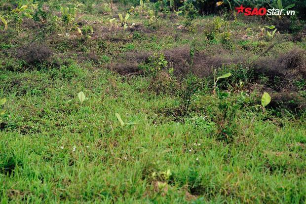 Dấu vết mùa rau húng gần như bị xóa sạch.