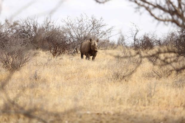 Vườn thú Safari là một cơ hội duy nhất để theo dõi các con vật trong môi trường sống riêng của nó.